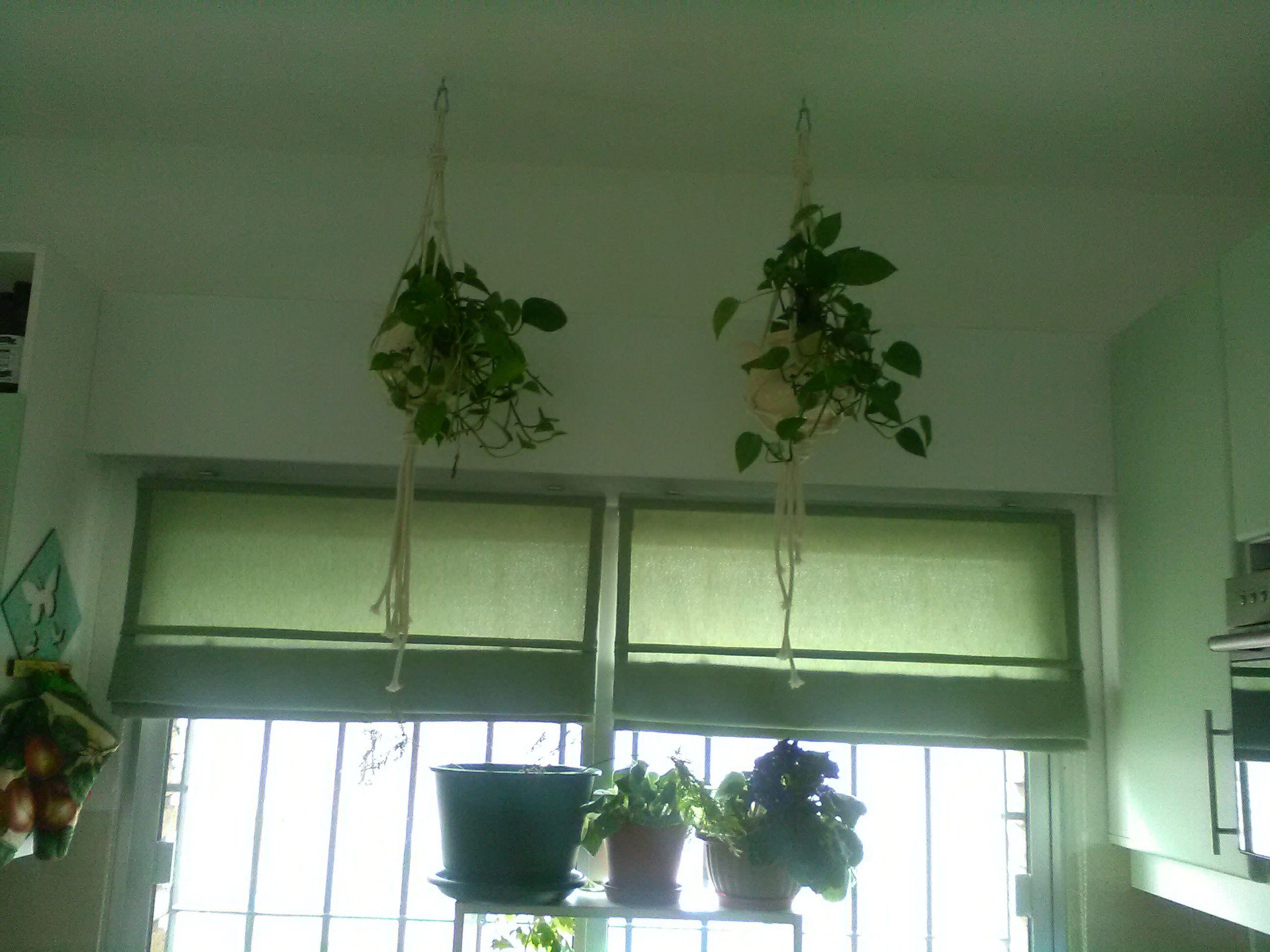Maceteros con cuerda de algodón. Puse las plantas en unas teteras ...