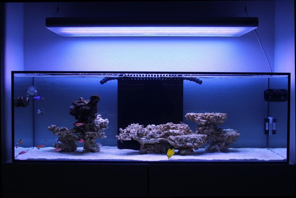 Minimalist Aquascaping | Reef aquarium, Saltwater aquarium ...
