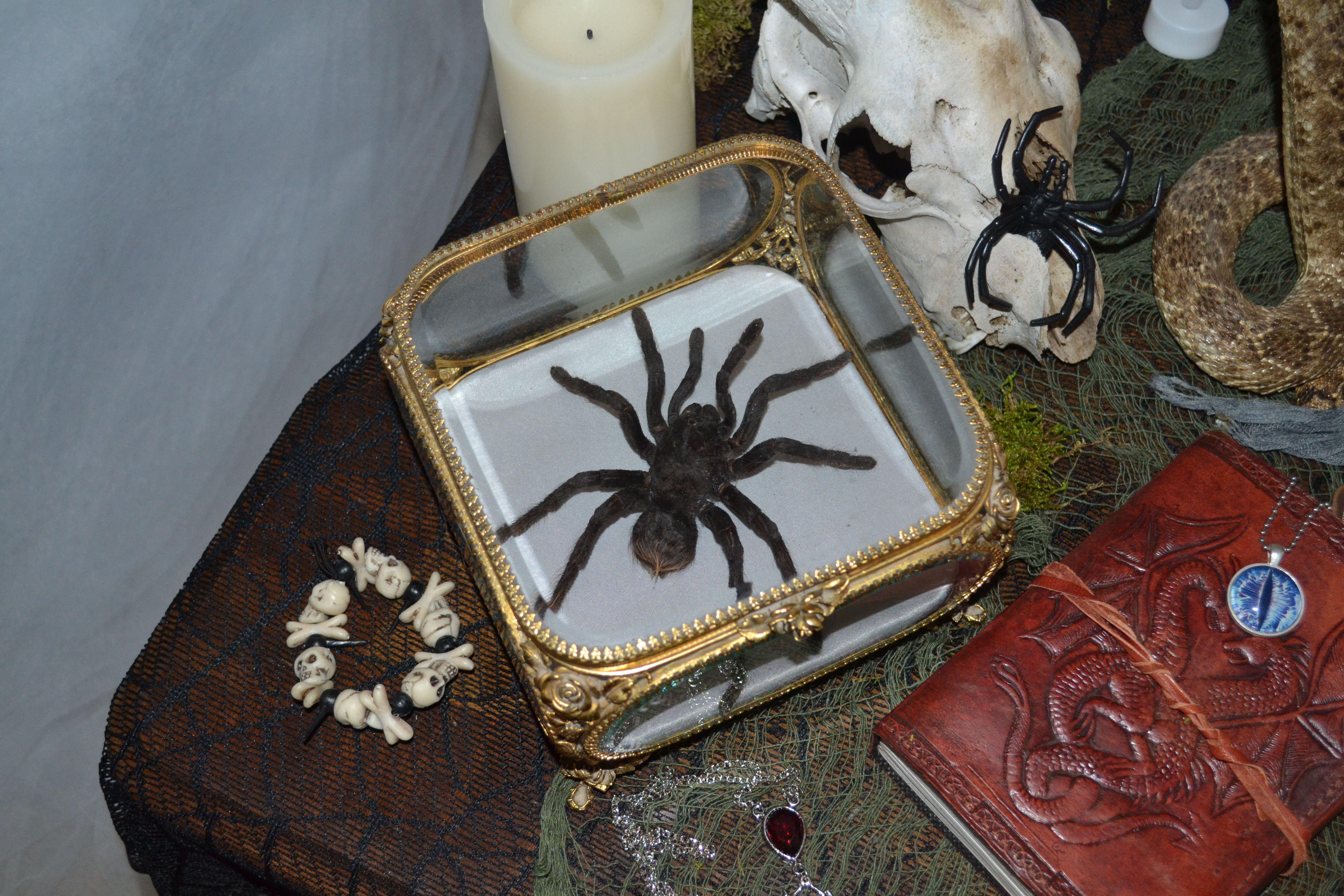Ormolu Casket for a Tarantula (Halloween Oddities)