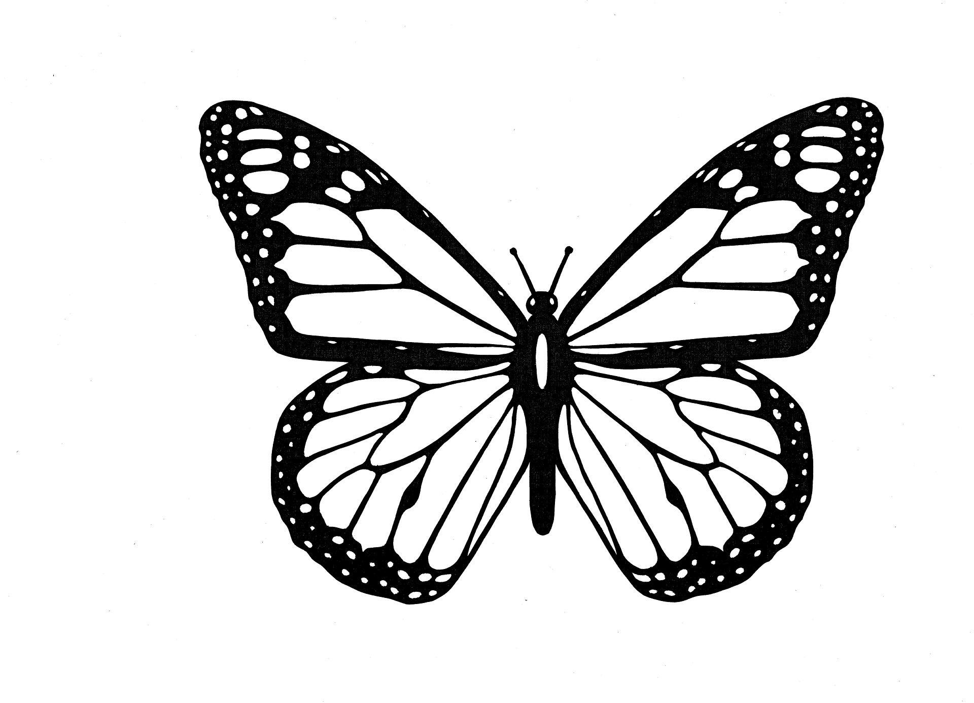 Coloriages papillons à imprimer. Dessins