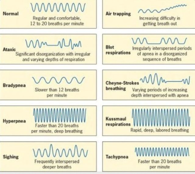 Respiratory Patterns  Ems Study Material