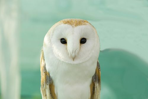 A little obsessed with owls right now.