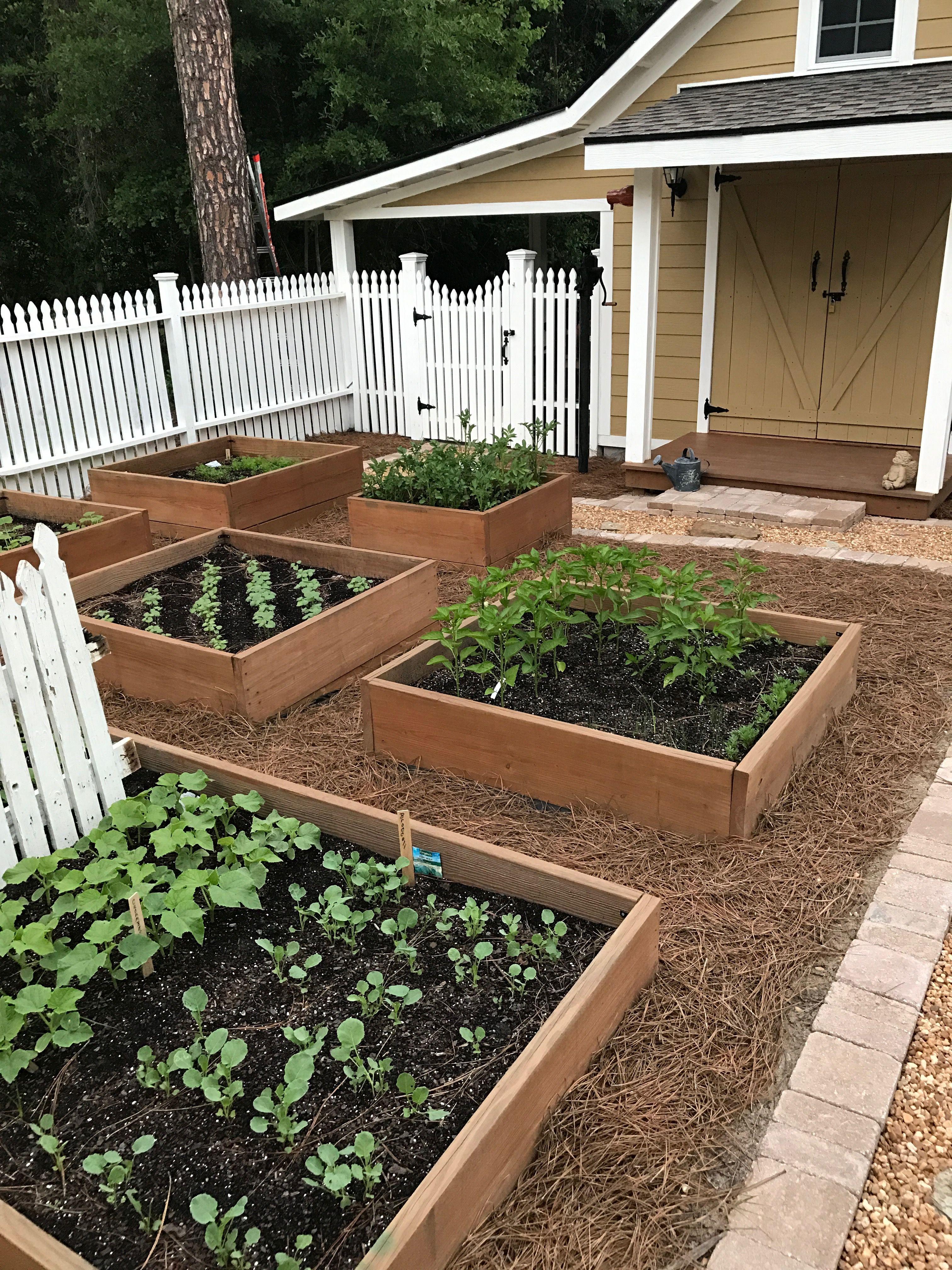 Pin by Mel on Harvest Garden | Vegetable garden design ...