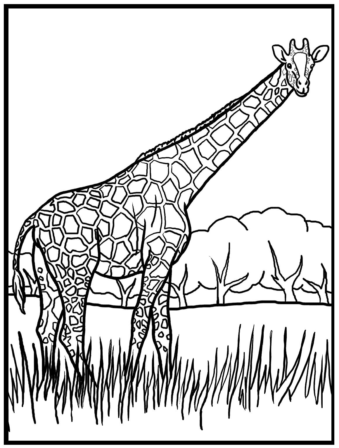 giraffe color page - Giraffes Coloring Pages