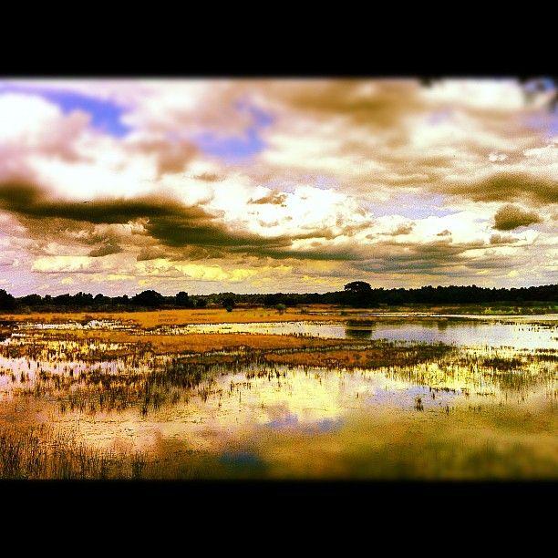 #photooftheday #border #germany #deutschland #niederlande #nederland #nature #water #bergvennen #instagood #instagram #instagrammers #beautiful - @marcel_tettero- #webstagram