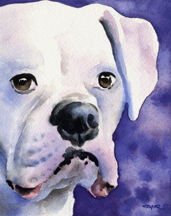 White Boxer Art Print By Watercolor Artist Dj Rogers Doggie