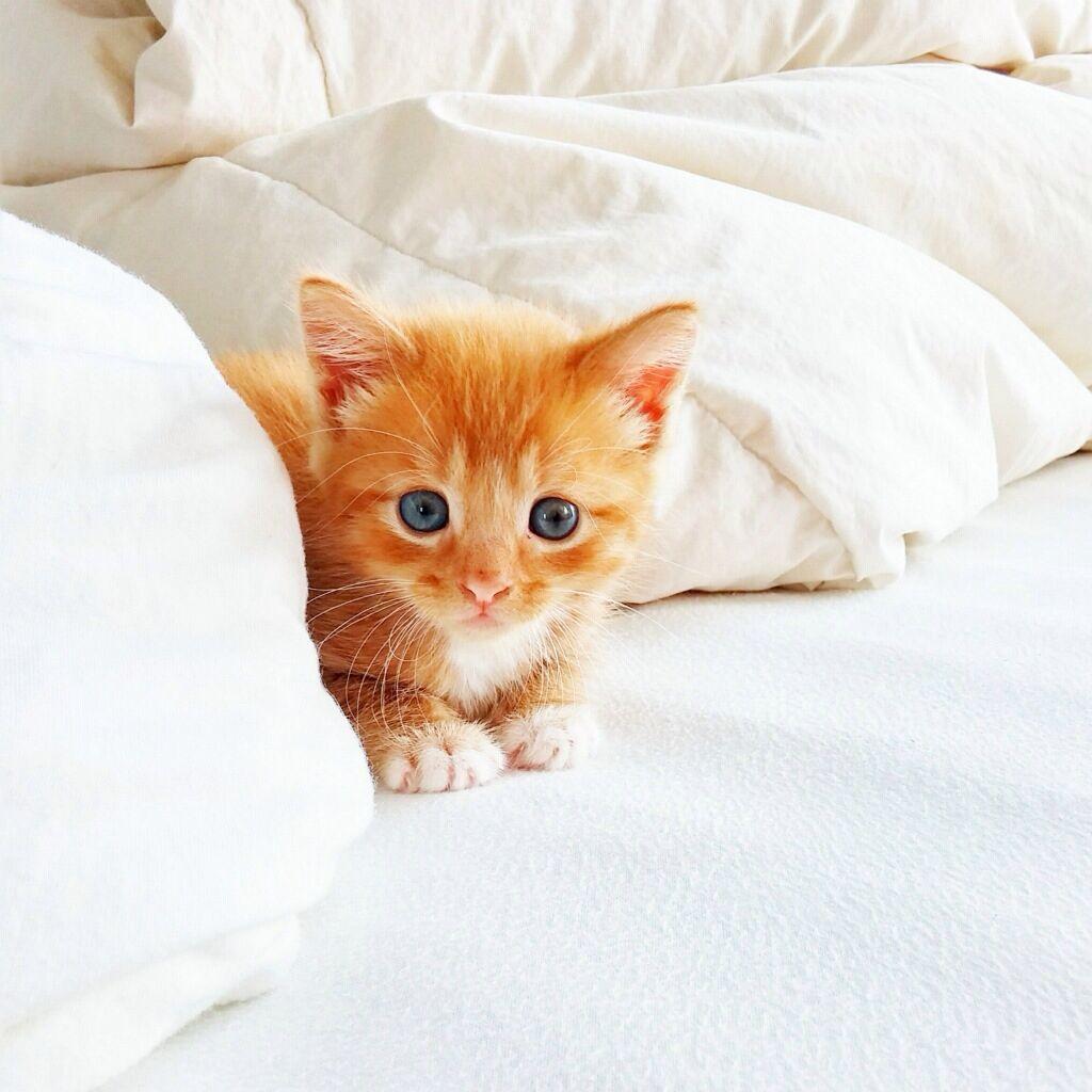 Cute Baby Kitten Cat Kitty Kitties Kittens Cutest Baby Cats And Kittens Baby Kittens
