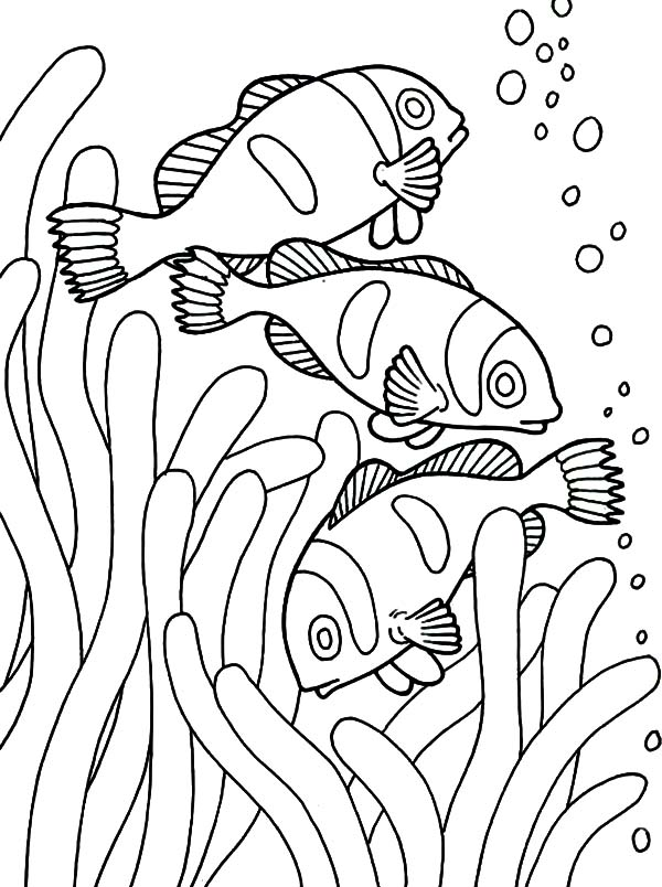 School Of Clown Fish Coloring Pages Best Place To Color Fish Coloring Page Cartoon Coloring Pages Horse Coloring Pages