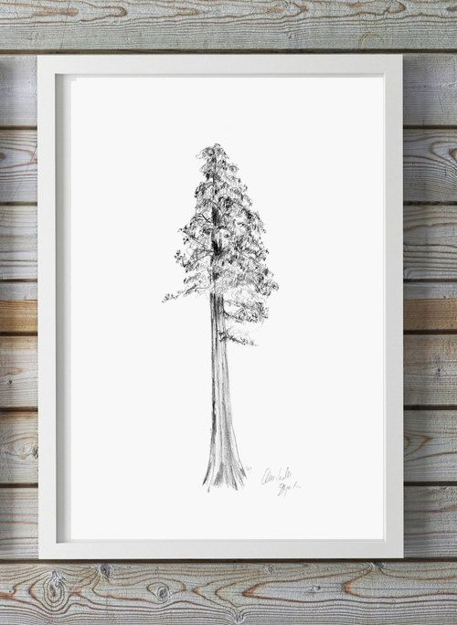 Sequoia Tree art - Pencil drawing - Giclee print - nature Decor - Tree sketch…