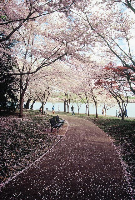 A Path Of Blossoms Nature Photography Landscape Scenery