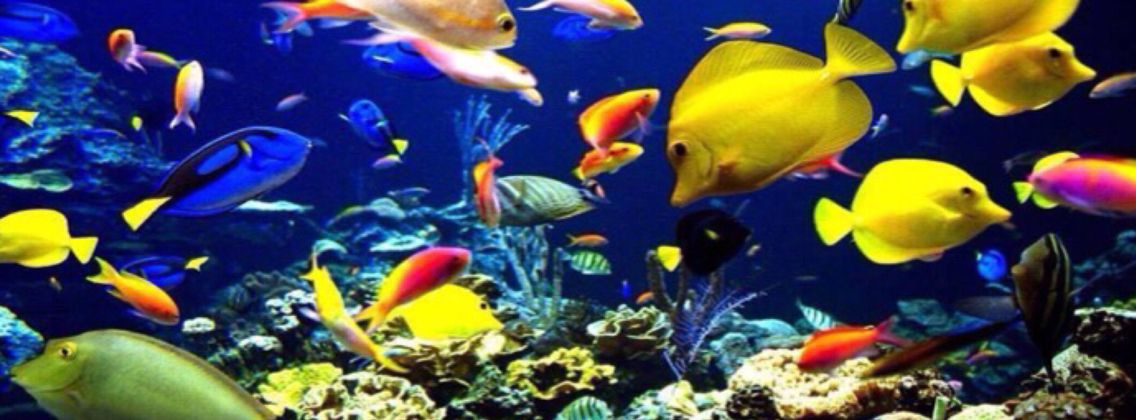 Under The Sea Facebook Cover Photo Fish Wallpaper Ocean Animals Sea Animals