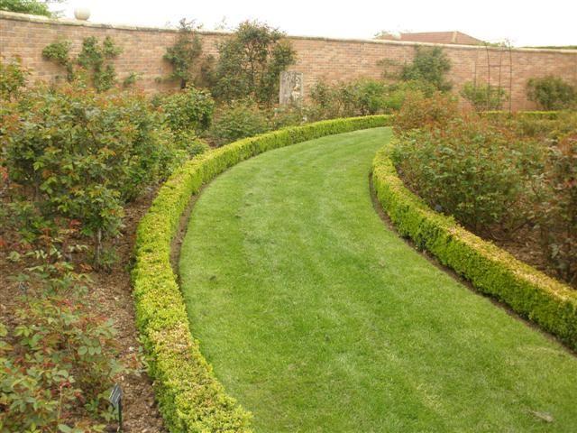setos bajos - pingo de oro - garden rose - arbustos Gardening