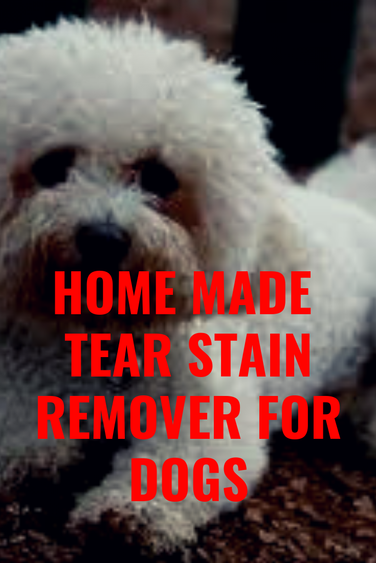 Homemade tear stain remover and other hacks using cornstarch on dogs