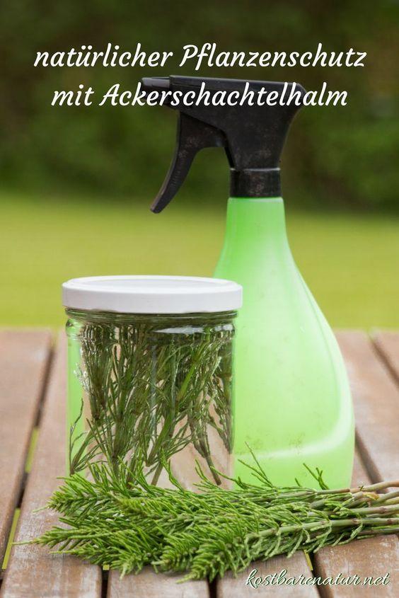 nat rliche pflanzenschutzmittel mit ackerschachtelhalm einfach selber ansetzen lesen. Black Bedroom Furniture Sets. Home Design Ideas