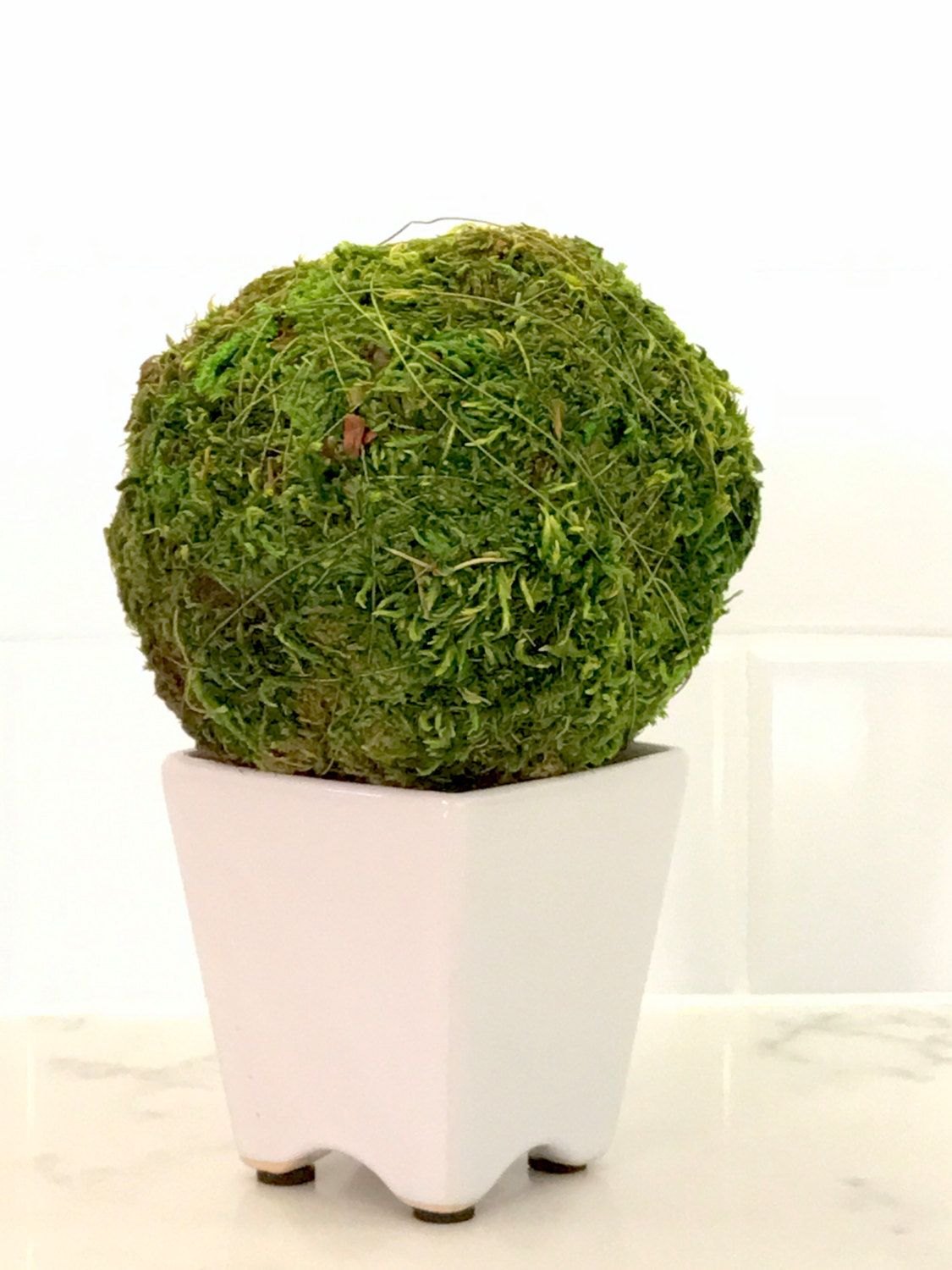 Decorative Moss Balls Inspiration Green Moss Ball Decor Moss Pomander Green Balls White Ceramic Vase Decorating Inspiration