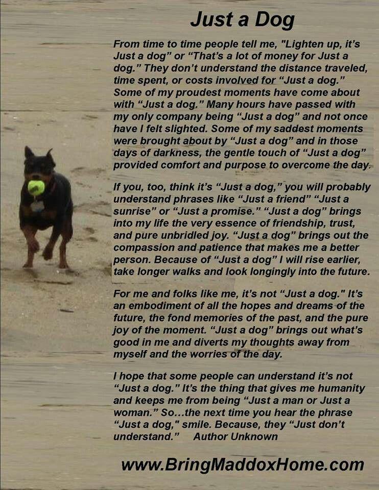 Dog Poem Dog Poems Doberman Love Dogs