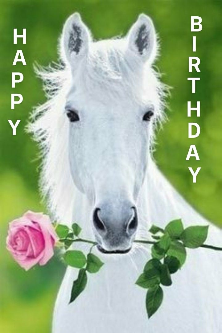 Pin Van Ylvi Op Cumpleanos Paarden Mooie Paarden Witte Paarden