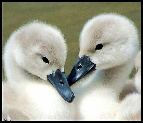 30 Susse Baby Tiere Sehen Sie Doch Nicht Niedlich Aus Susse