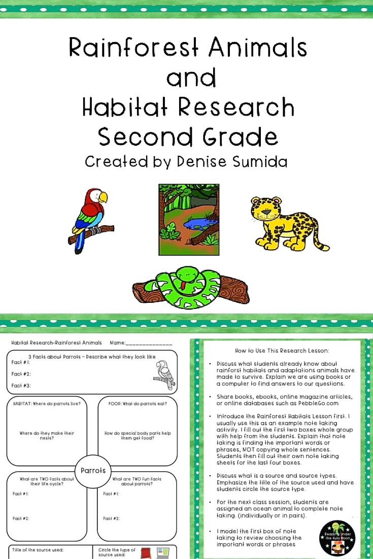 Rainforest Animals And Habitat Research Second Grade Rainforest