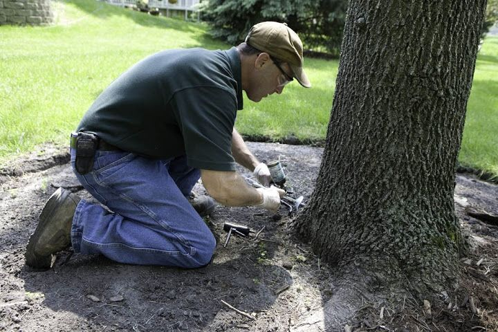 Tree Preservation Services in Illinois for good health of