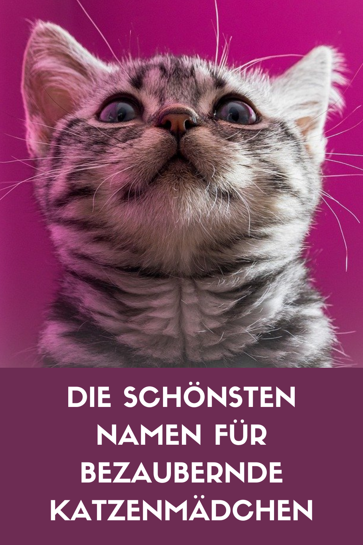 Auf Der Suche Nach Einem Sussen Namen Fur Dein Katzenmadchen Dann Bist Du Hier Genau Richtig Uber 300 Bezaubernde Namen Fur We In 2020 Katzen Namen Katzennamen Katzen
