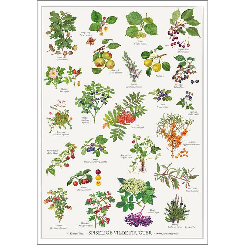 Plakat A2 Spiselige Vilde Frugter Spiselige Blomster Blomster Plakater