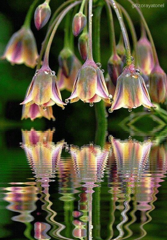 Wasser und Blumen, schön.  #blumen #exoticgardenideas #schon #wasser #schöneblumen