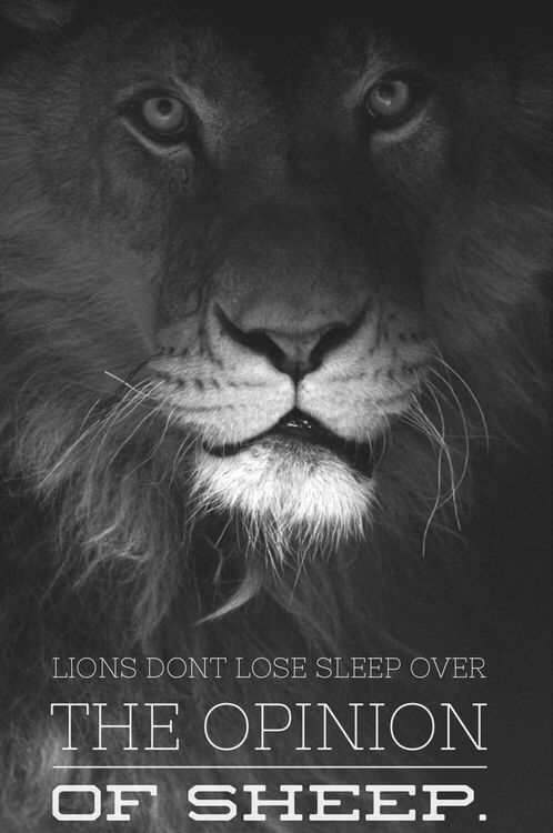 Lions Don T Lose Sleep Over The Opinion Of Sheep Animals Black