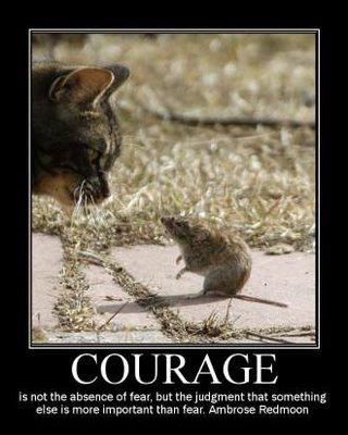Courage | Cute animals, Animals, Cats