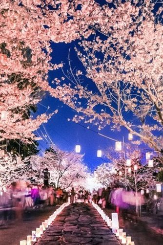 10 Of The World S Most Beautiful Places In Bloom World Most Beautiful Place Beautiful Places Cherry Blossom Festival