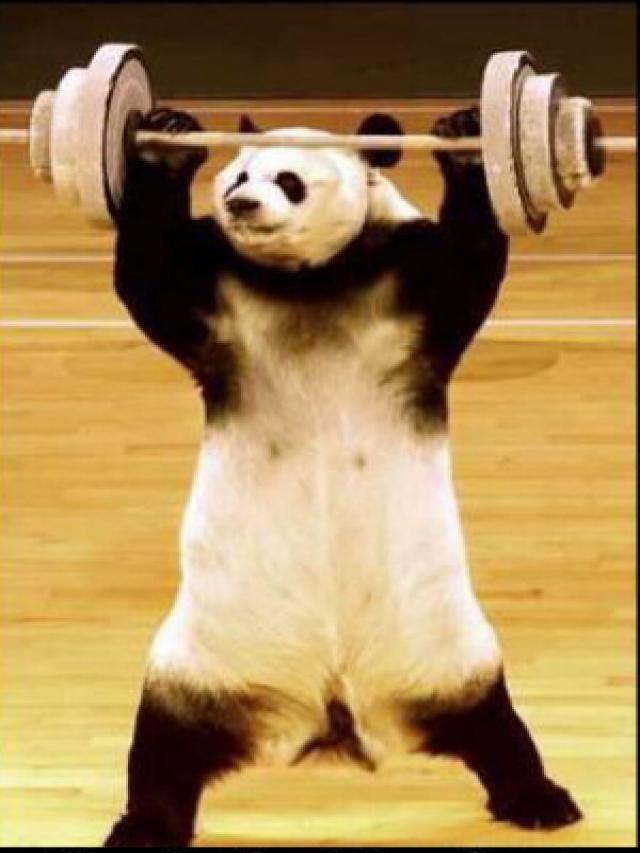 Oso Panda Gracioso Buscar Con Google Motivacion Fitness