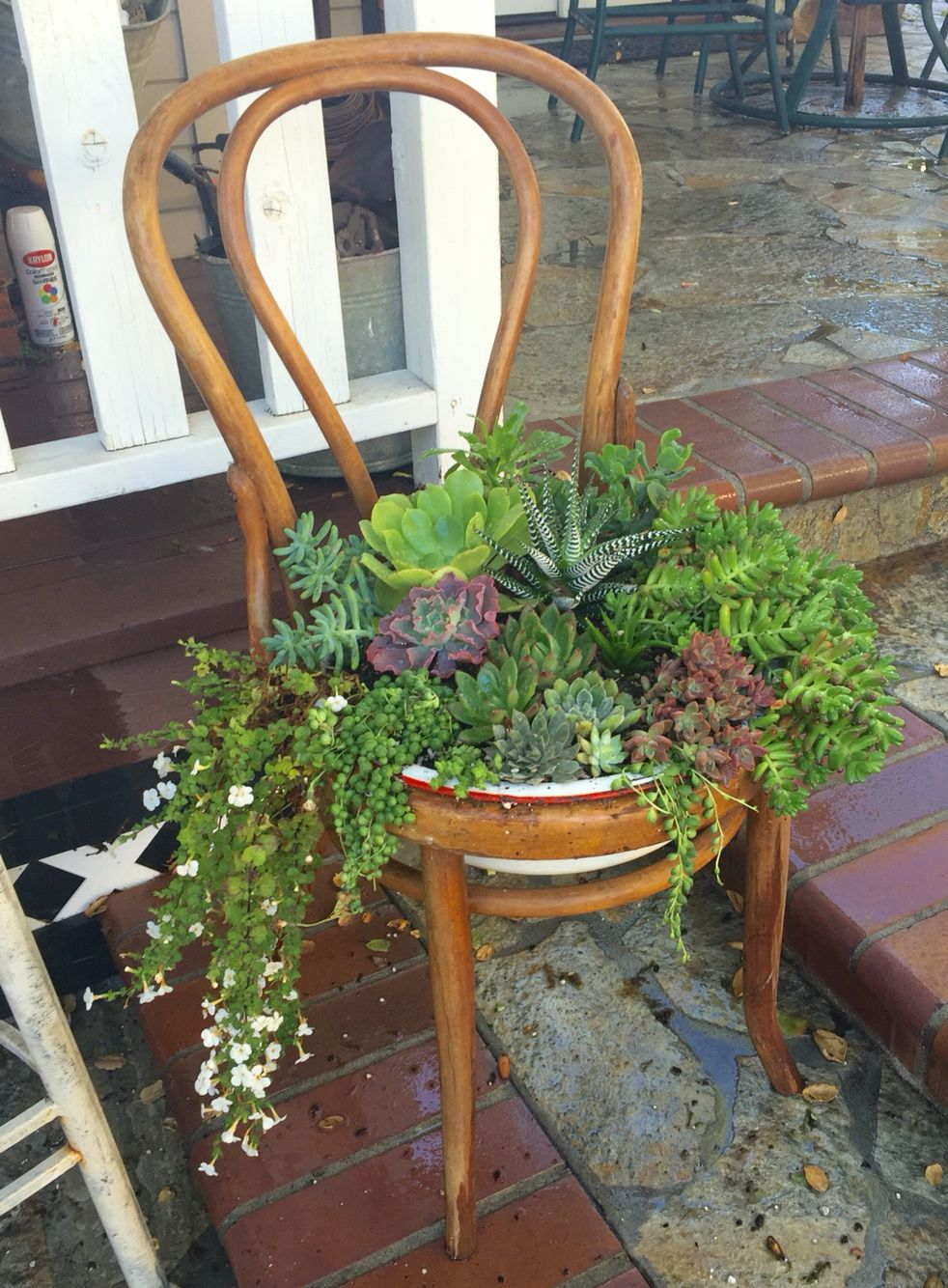 A vintage chair planted with succulents. Will be available at #junkbonanza. Follow me at The SheShed on Instagram