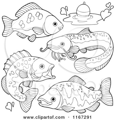 Freshwater Fish Coloring Pages Trends Coloring Freshwater Fish Colouring Book Fish Coloring Page Fish Painting Fish Clipart