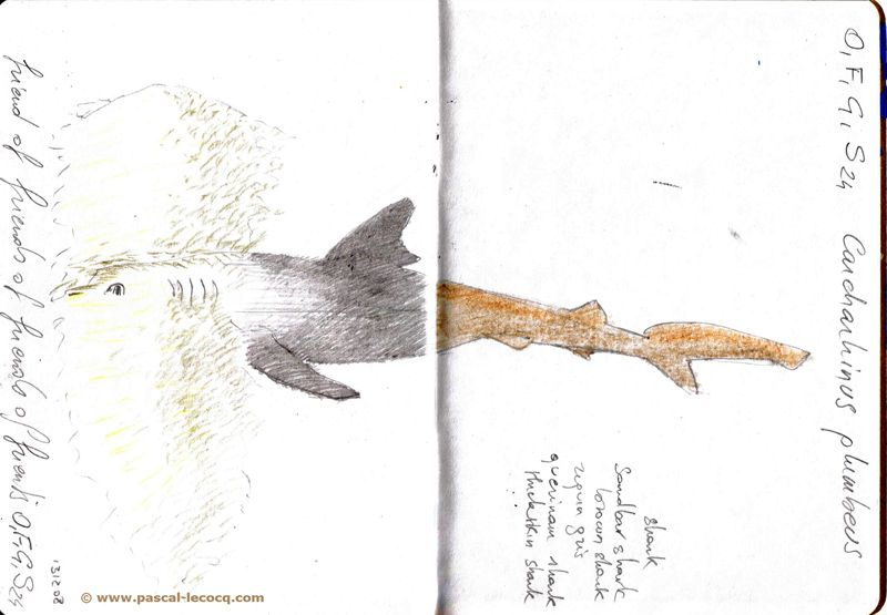 Carnet Bleu: Encyclopedia of…shark, vol.XII p4, pencil on paper by Pascal Lecocq, The Painter of Blue ®, 7x5, 2013, lec888ep4, public coll. Brooklyn Art Libr...