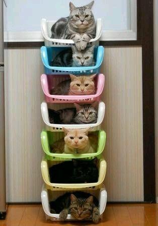7 gattini in 7 ceste!!