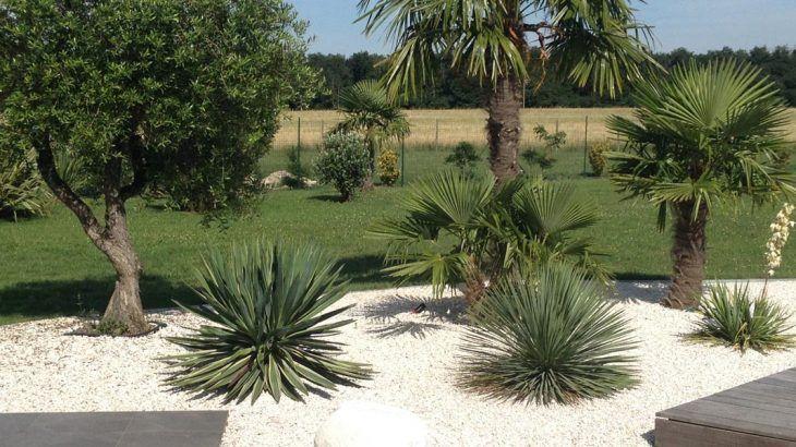 Massif Olivier Palmier Massif Avec Palmier Creation D Un Massif Jardin Massif Amenagement Jardin Galet Deco Exterieur Jardin