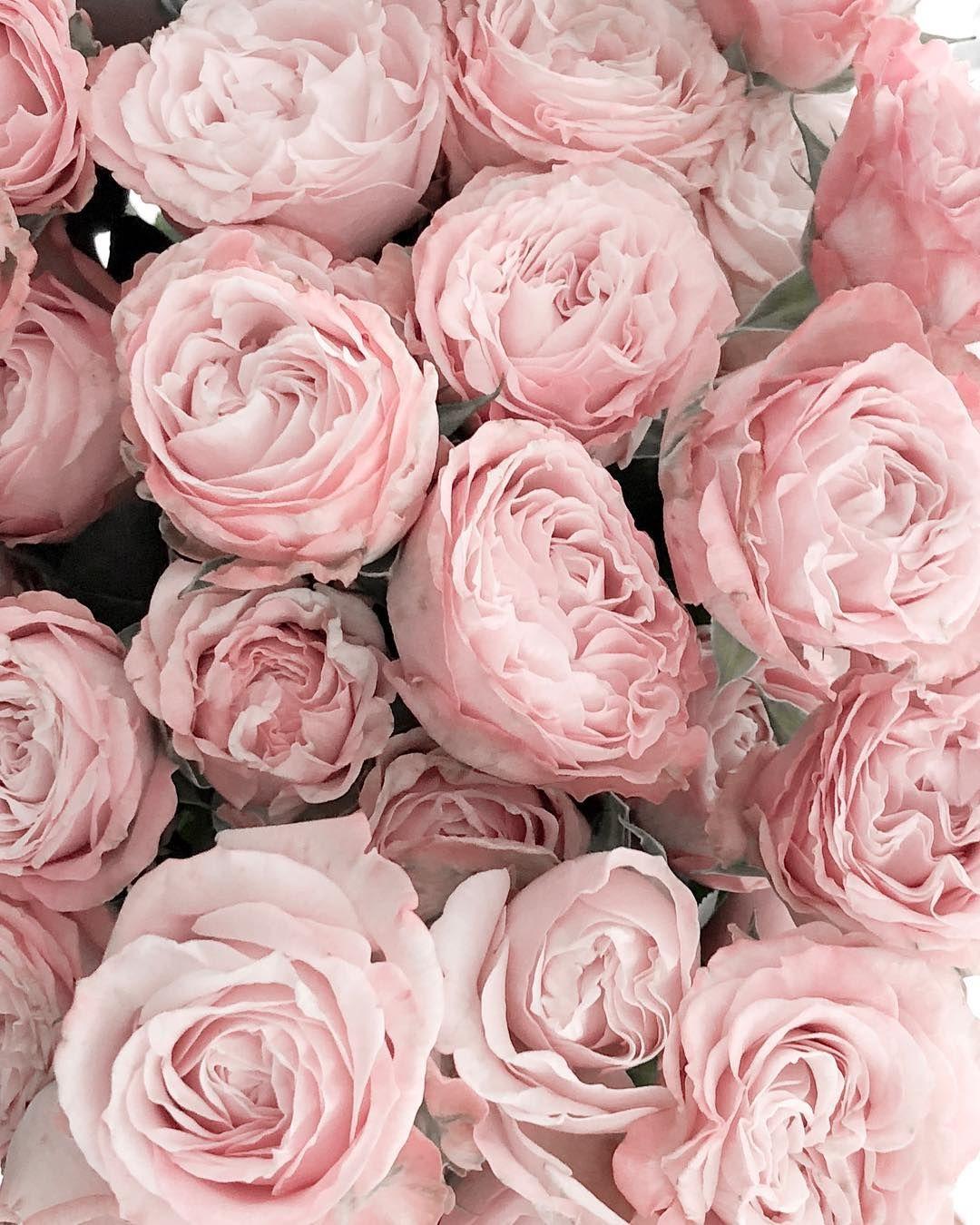 год цветы розовых оттенков картинки инвестиции рынок