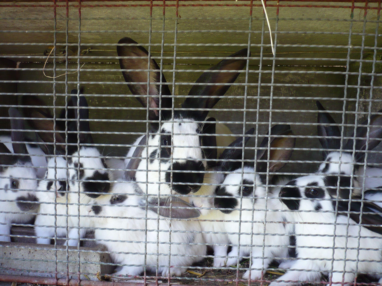 Rabbits Family