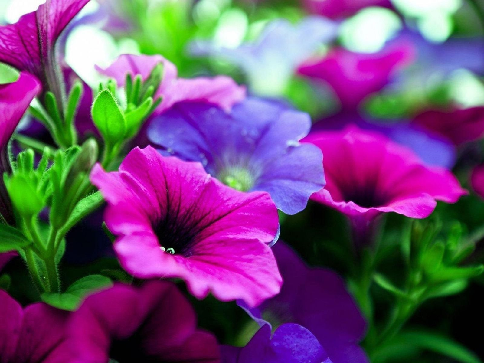 Pink Purple Flowers Wallpaper To Do Pinterest Flower Wallpaper