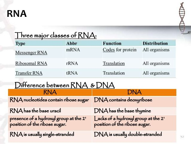 a comparison of the similarities and differences between dna and rna Dna/rna differences and similarities between deoxyribonucleic acid and ribonucleic acid 10 / 5 overall comparison dna bases are bonded together by hydrogen bonds which makes the overall structure stableboth dna and rna have&nbsp.