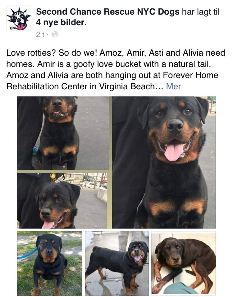 5 2 16 4 Precious Rotties Are In Need Of Loving Homes Please