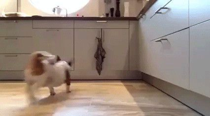 if i had a dog, i'd train it to do this