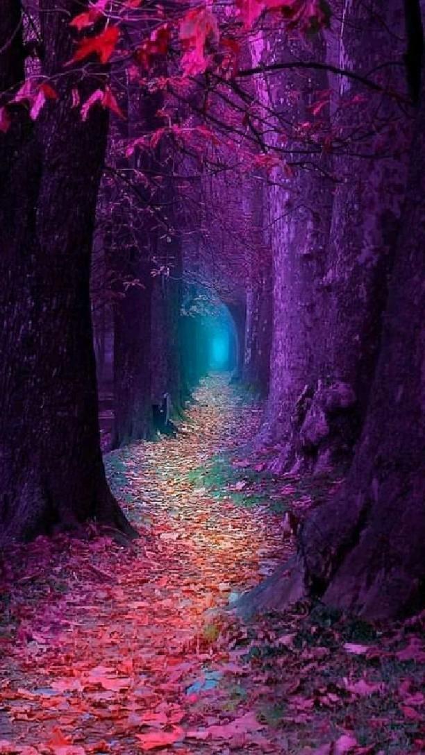 Nature pathway  �💙���