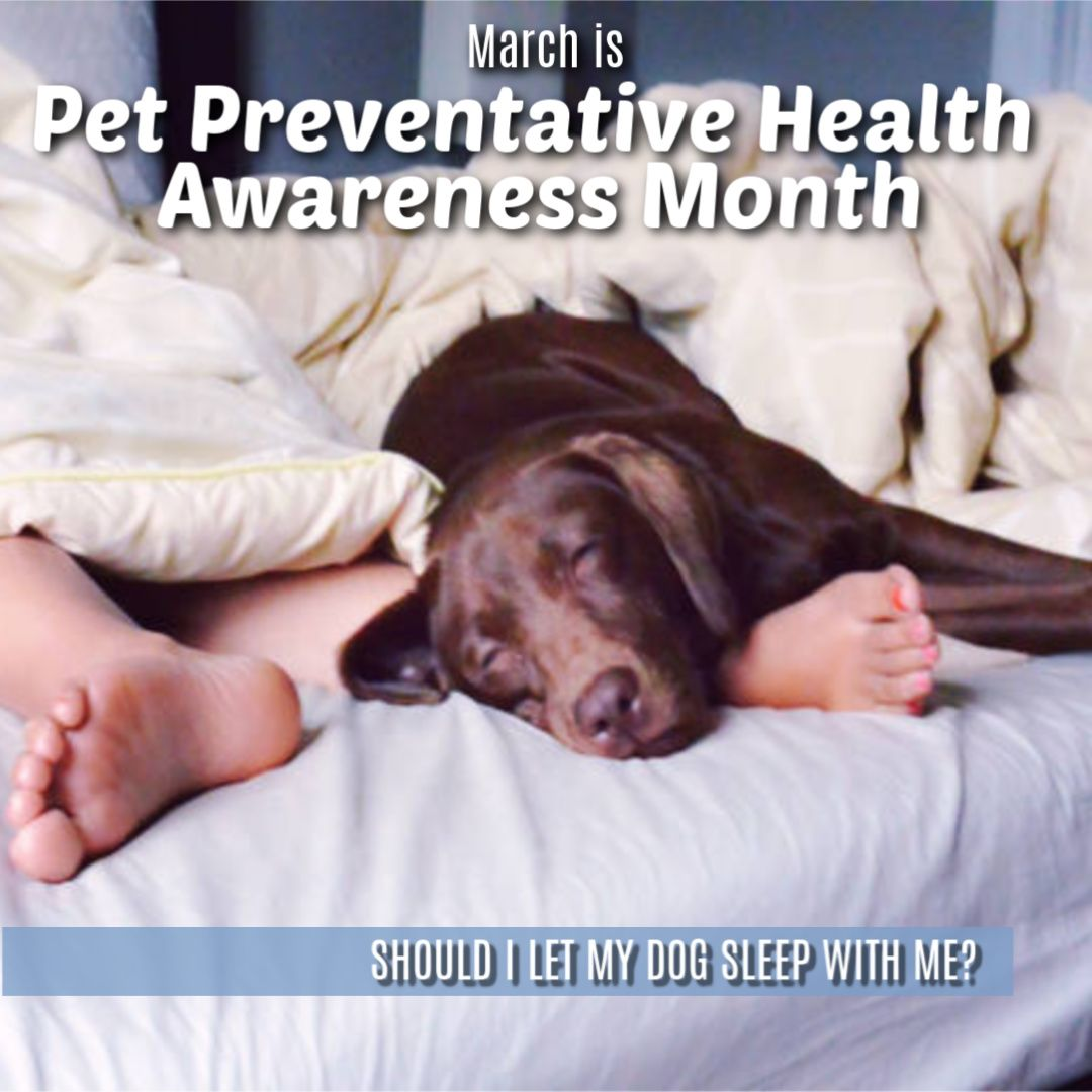Should I Let My Dog Sleep With Me In 2020 Sleeping Dogs Health Awareness Months Preventative Health