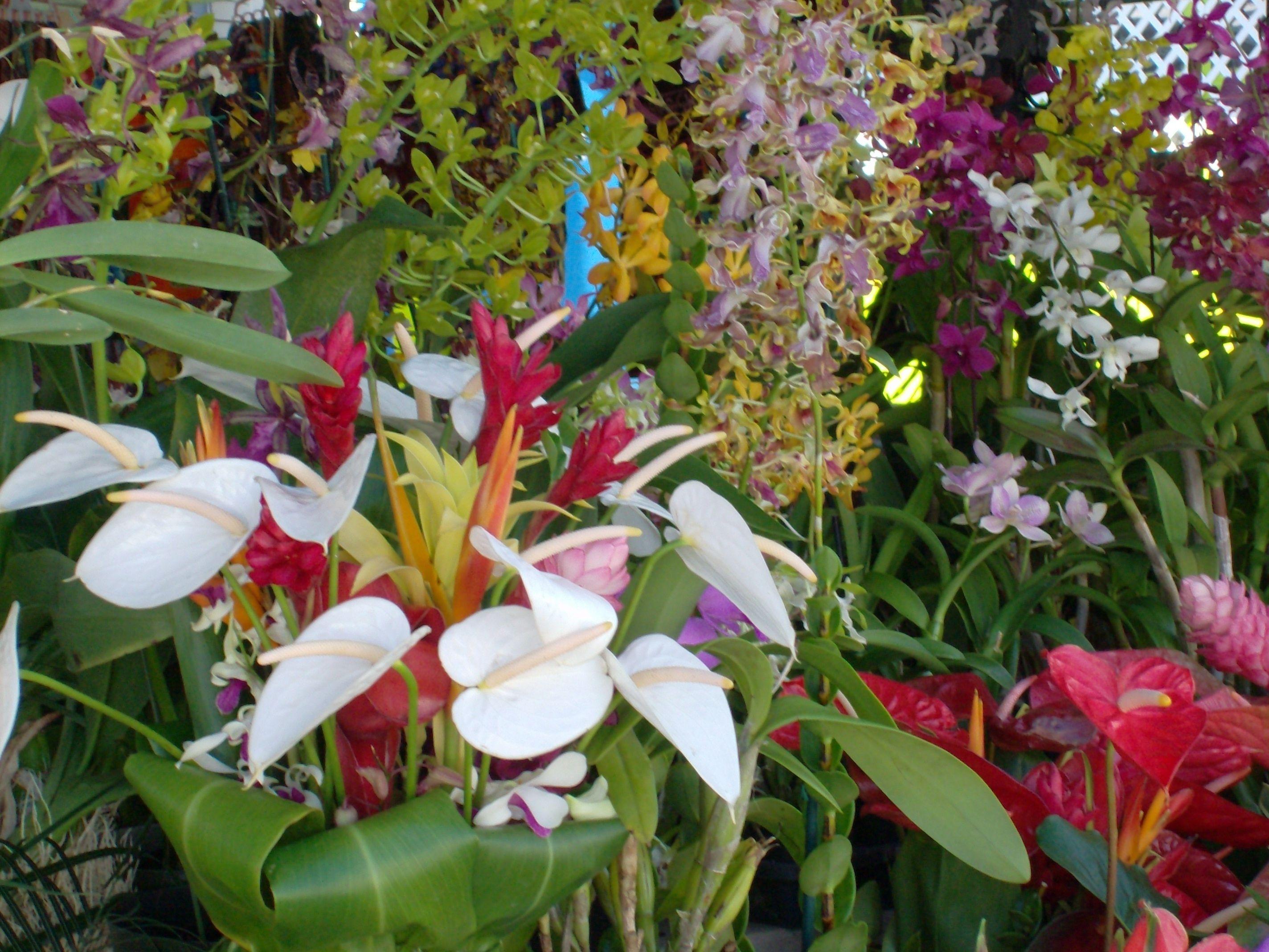 Hawaiian Tropical Flowers Meditation Garden Pinterest Tropical
