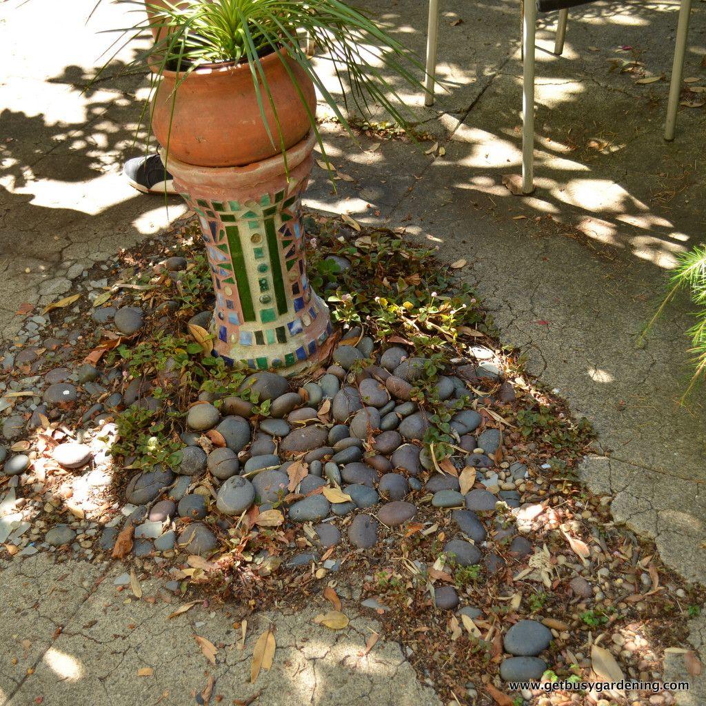 Tour of Organic Mechanics Garden | Gardening | Pinterest | Gardens