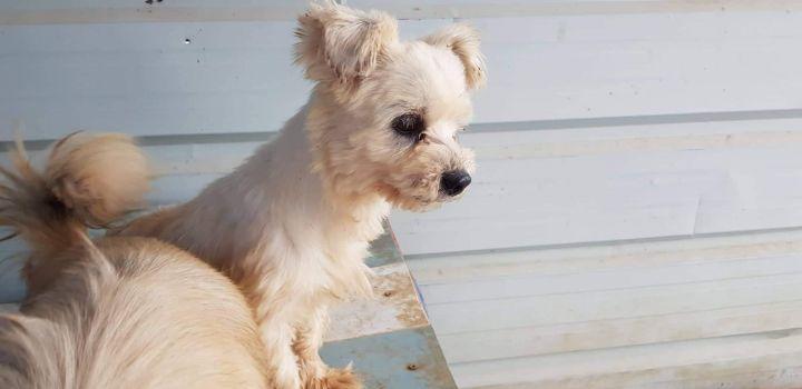 Adopt Jellybean On Terrier Mix Yorkie Terrier Mix Terrier Mix Dogs