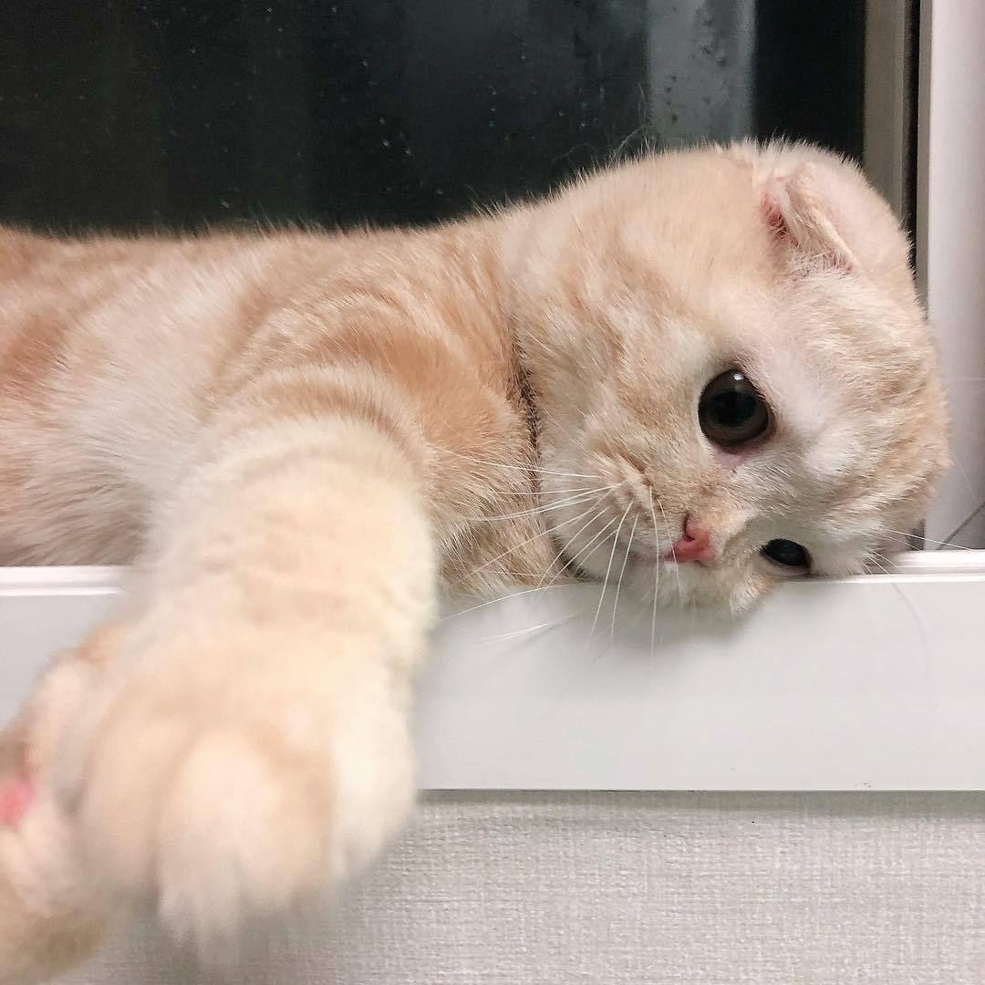 Ken Dian Adli Kullanicinin Animals Panosundaki Pin Sevimli Hayvan Yavrulari Sevimli Kediler Sevimli Kedi Yavrulari