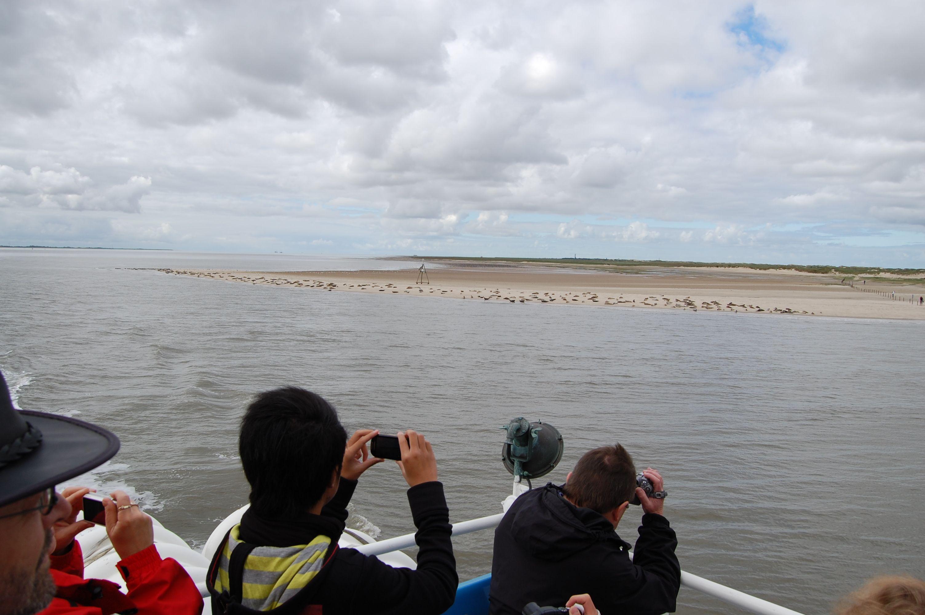 Seehundbank vor Norderney auf der Fährüberfahrt von Neßmersiel nach ...