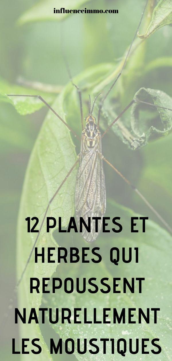 12 PLANTES QUI REPOUSSENT NATURELLEMENT LES MOUSTIQUES